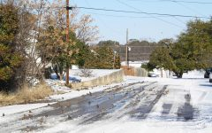 Birds enjoy having access to water again as the rare snow thaws in Lampasas.