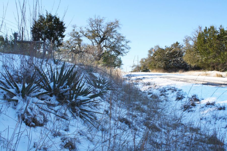 Yucca plants bear the weight of ice and snow in Lampasas during the week of Feb. 15.