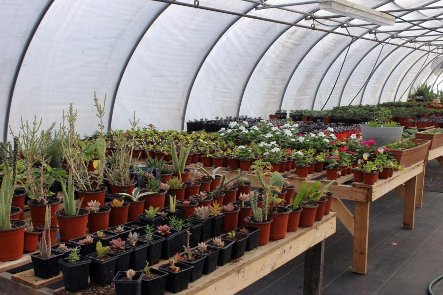 Natural Beauty in Denmark, Wisconsin donated an abundance of plants to the greenhouse.